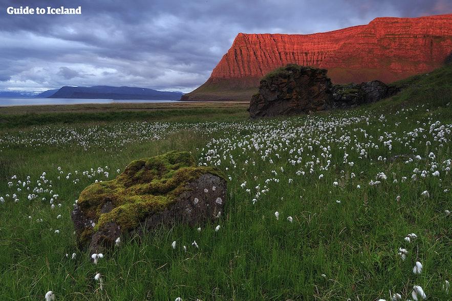 The Icelandic Westfjords during summer