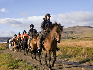 Horse Riding & Puffins | Day Tour