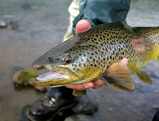 Lake and river fishing - angling tour for you