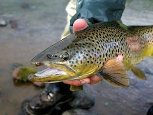 Lake and River Fishing   Angling Tour