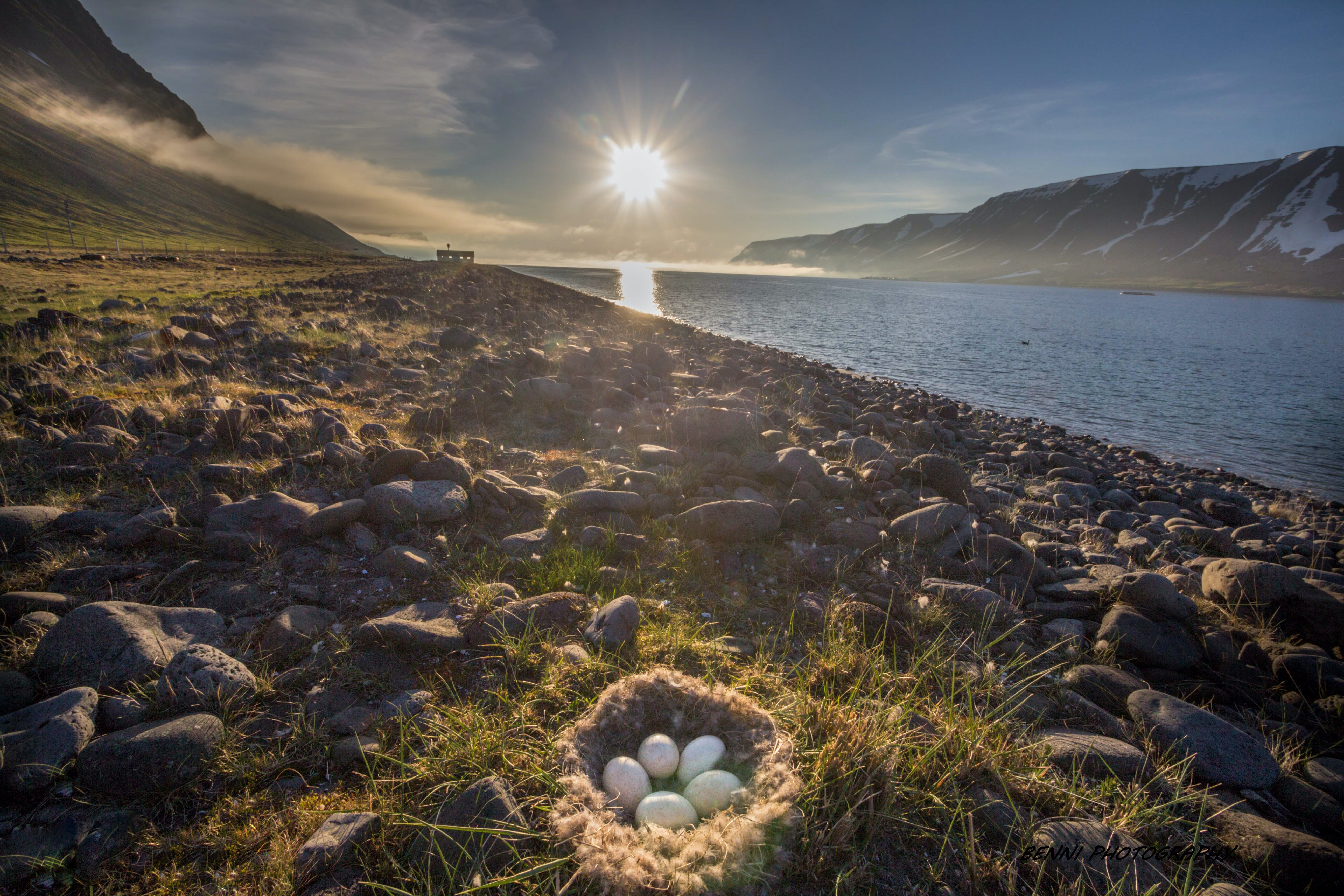 Living in the Westfjords
