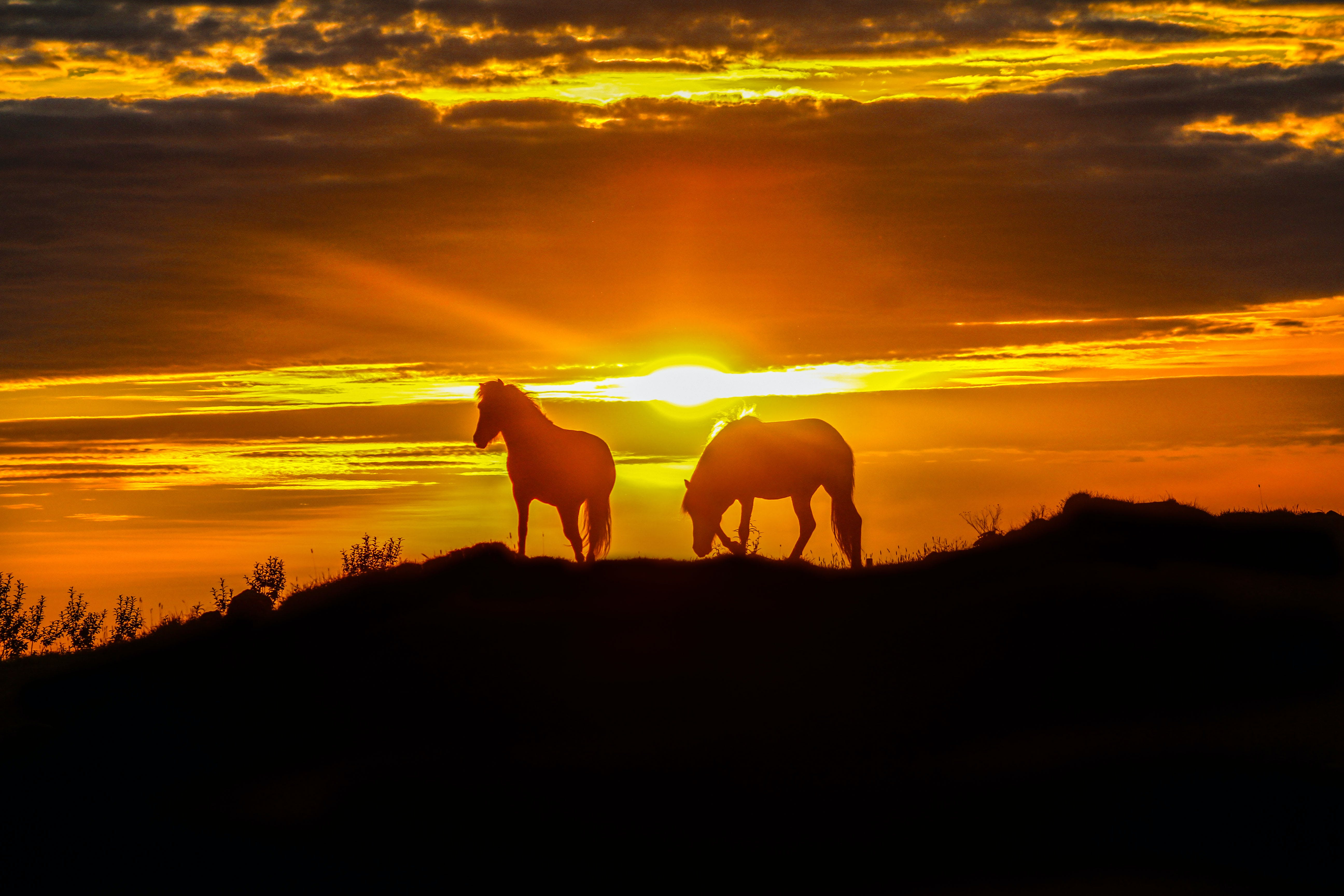 Horses in the sunset, Westfjords, Iceland