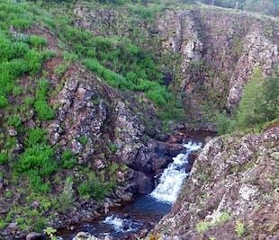 Sortie pédestre à Mosfellsbær | Visite et balade avec un islandais