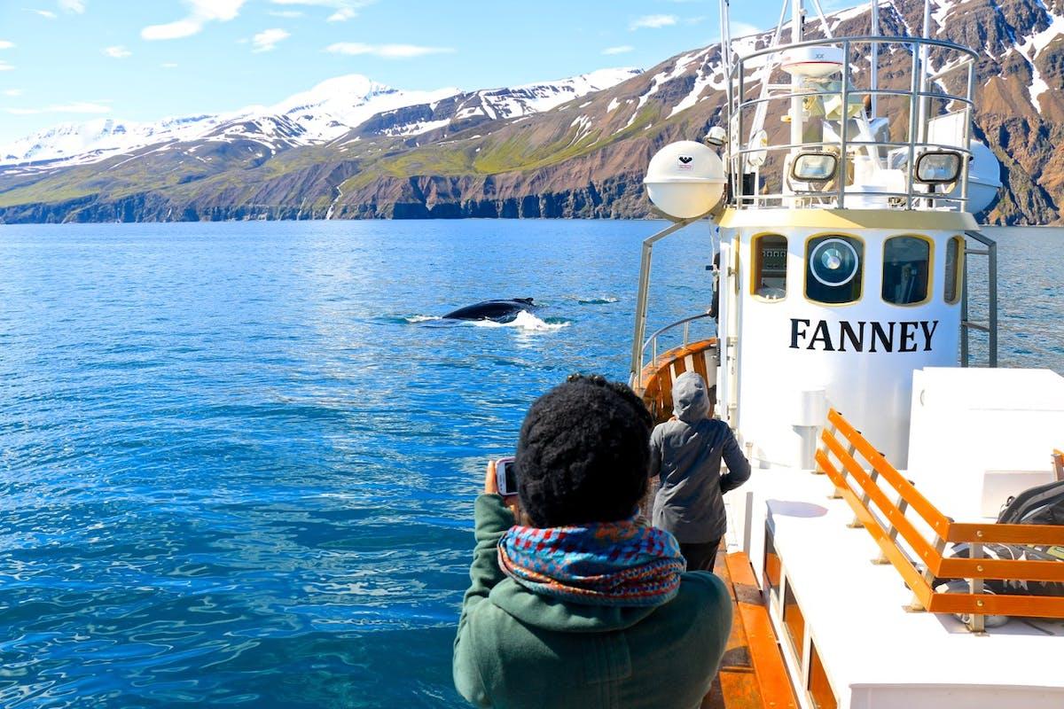 Salka Whale Watching hero image