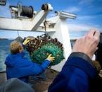Au cours de l'aventure Viking Sushi à Breidafjordur, une charrue de mollusques et de crustacés est descendue dans les profondeurs.