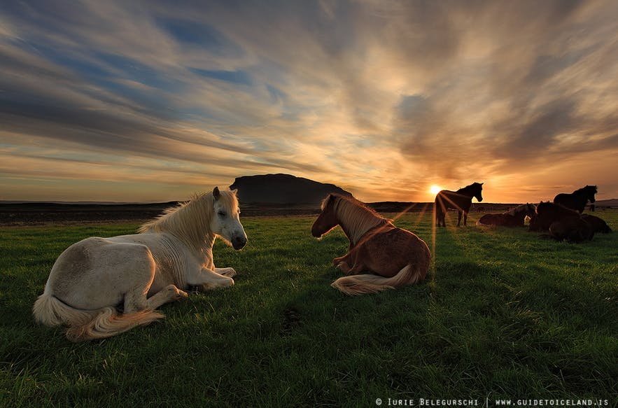 아이슬란드 말