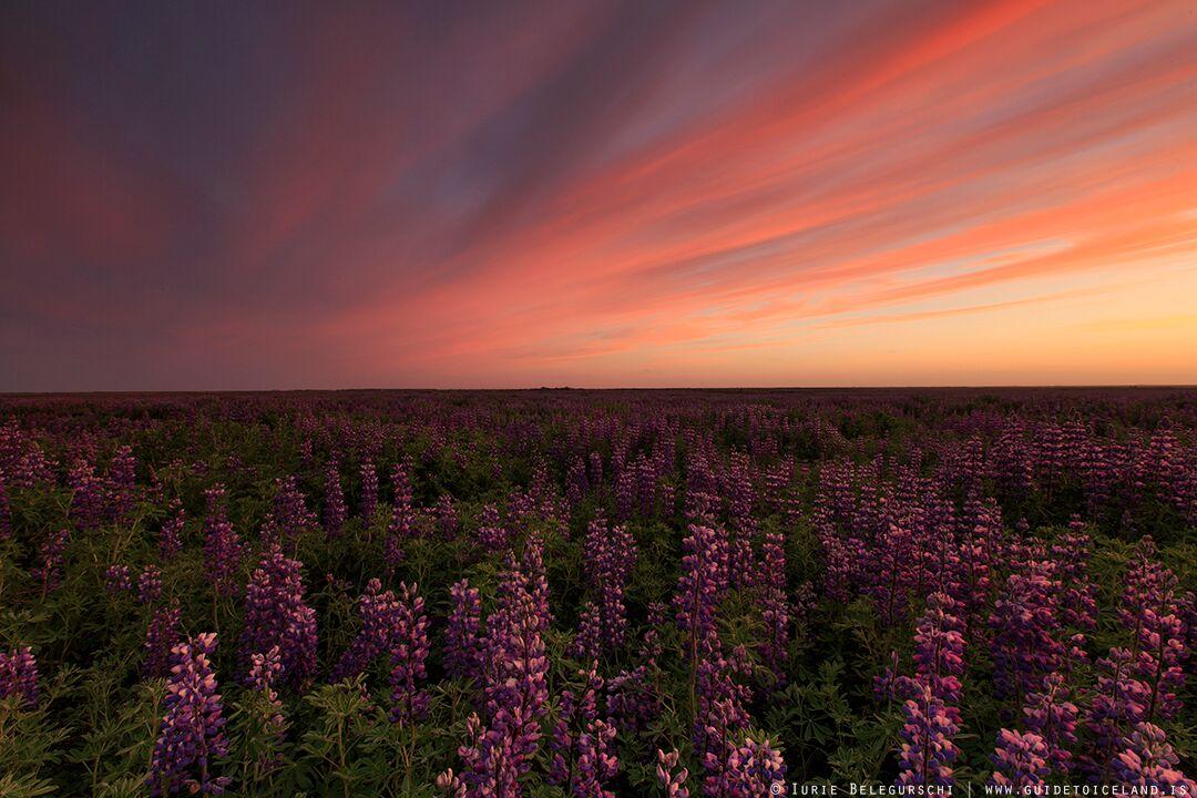Ventajas y desventajas de Islandia en verano