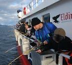 ファクサフロゥイ湾に出る海釣りツアー中に様々な海鳥やクジラに出会えるチャンスがある