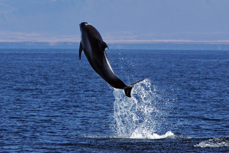 Baleines et Macareux