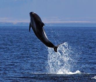 Baleines et Macareux   Au large de Reykjavik   Pack 2 excursions