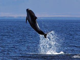 Oglądanie wielorybów i maskonurów