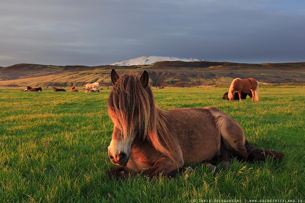 Horse Riding and Golden Circle Day Tour | Two Essential Icelandic Experiences