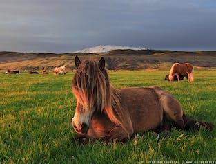 Excursión a caballo y viaje al Círculo Dorado