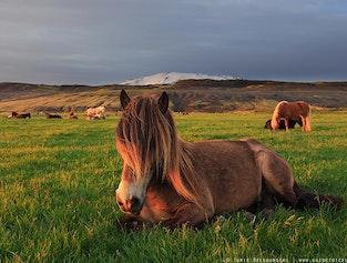 Horse Riding and Golden Circle Tour