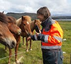 On you ATV ride from Reykjavík, you will have to meet the unique Icelandic horse breed.