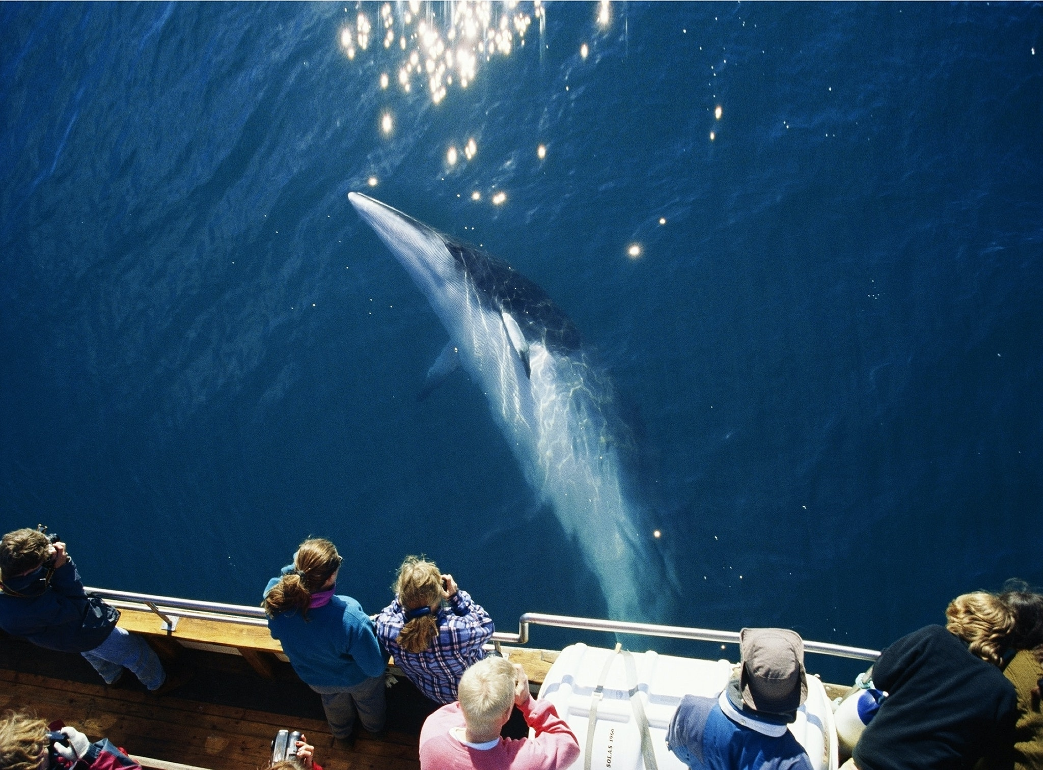 Admire whales in whale watching tour in Iceland!