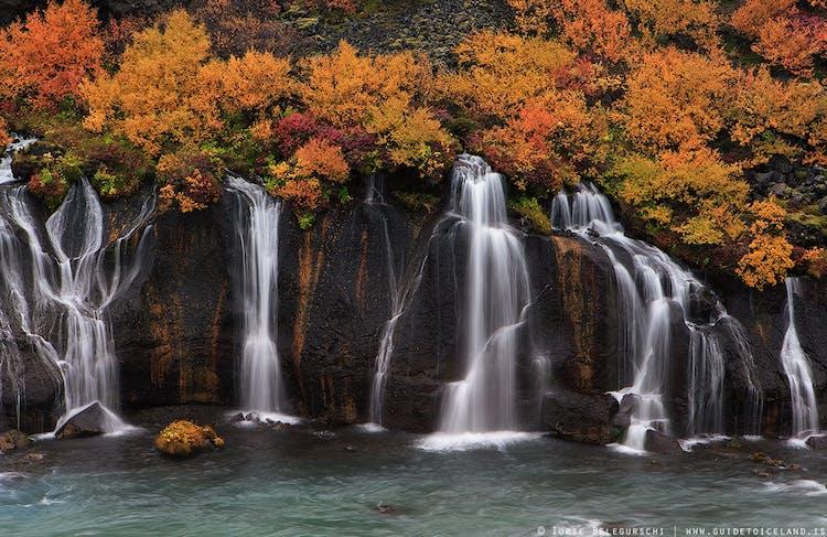 Le cascate di Hraunfossar sono meravigliose mentre precipitano giù per le rocce laviche, punteggiate da alberi colorati d'autunno