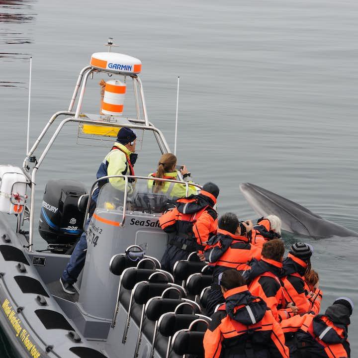 雷克雅未克快艇观鲸、观海鹦船游旅行团