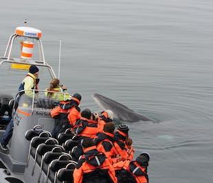 ใกล้ชิด |ฝูงวาฬ นกพัฟฟิน & ชายฝั่งของเมืองเรคยาวิก