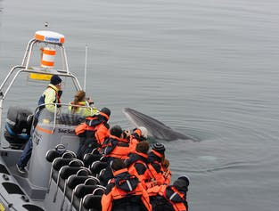 Close Up   Whales, Puffins & Reykjavik Coast