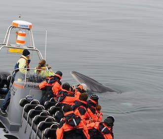 고래, 퍼핀 관측 투어| 레이캬비크 해안 보트 여행