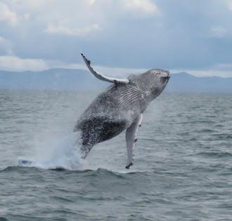 Observation de baleines depuis Reykjavík