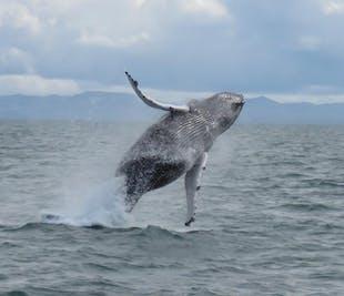 ทัวร์ชมวาฬจากเมืองเรคยาวิก