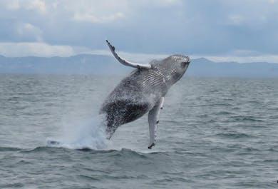 Excursión de avistamiento de ballenas desde Reikiavik