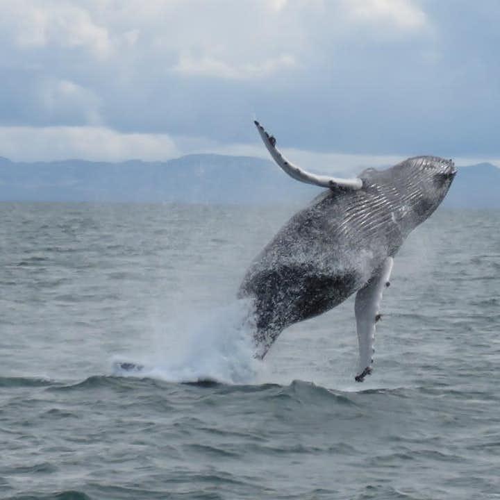 Тур по наблюдению за китами из Рейкьявика