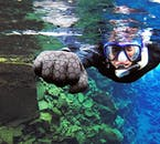 Snorkelling in Silfra fissure is like snorkelling like no where else on earth.