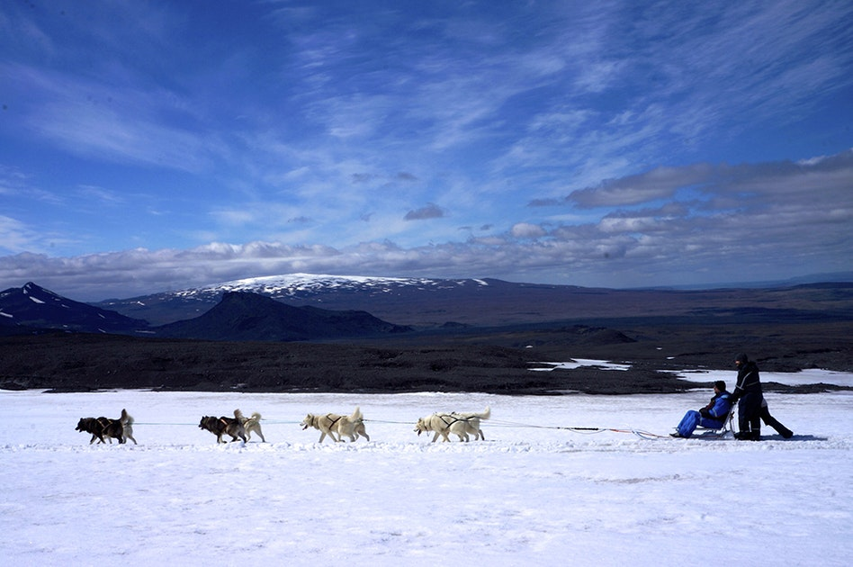 Can You Dog Sled In Iceland