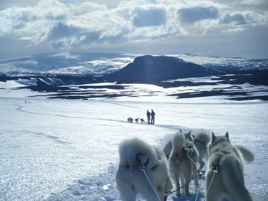 Dogsledding on Langjökull glacier