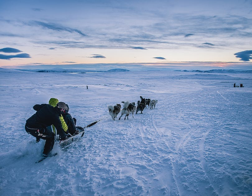 Dog Sledding Reviews