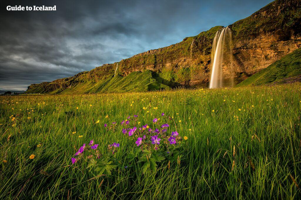 En av floderna som bildats av Eyjafjallajökulls smältvatten rinner ut i det vackra vattenfallet Seljalandsfoss.