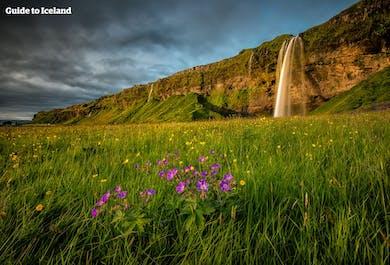 6일간의 렌트카 여행 패키지   아이슬란드 블루라군, 골든써클 & 요쿨살론 빙하 라군