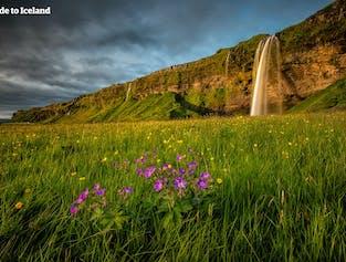 Uno de los ríos formados por el agua de deshielo de Eyjafjallajökull conduce a la hermosa cascada de Seljalandsfoss.
