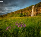 Seljalandsfoss, pictured in summer in a verdant field of wildflowers.
