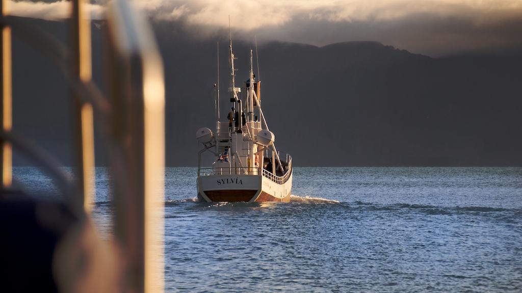 Únete a una excursión de avistamiento de ballenas desde Húsavík, el mejor puerto de avistamiento de ballenas de Islandia.