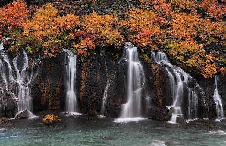 Hraunfossar è circondato dalla vegetazione, che riflette sempre ed esagera la stagione, come si vede in questo scatto autunnale.