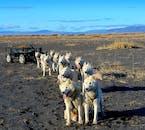 Vous découvrez de beaux paysages islandais lors d'une sortie chien de traîneau en Islande