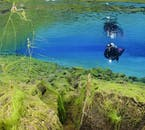 'The Real Blue Lagoon' is at the end of Silfra fissure, and vividly coloured.