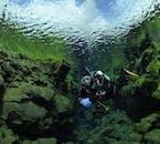 藻の緑が美しい世界を作り出す夏のシルフラの水中の世界