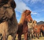 草を食む馬たちも、カメラを構えると寄ってくるフレンドリーさだ