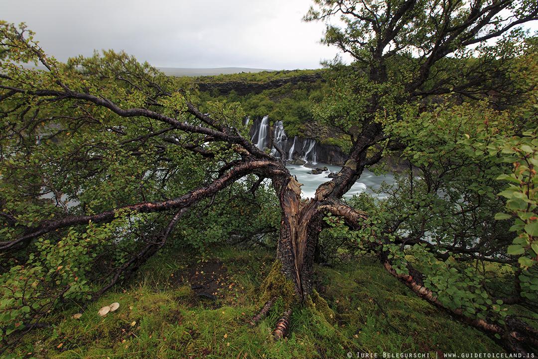 Der Wasserfall Hraunfossar liegt im Westen Islands, ganz in der Nähe eines anderen Wasserfalls mit Namen Barnafoss.