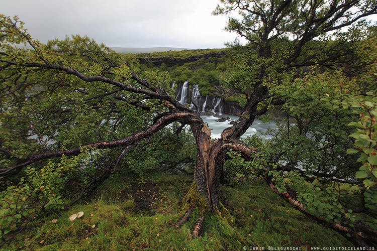 Hraunfossar waterfall is in west Iceland, next to another waterfall called Barnafoss.