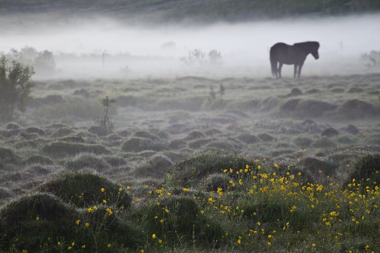 You would do well to join a horse riding tour while travelling in Iceland.