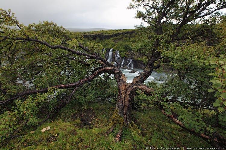 Visita l'Islanda occidentale e ammira la cascata di Hraunfossar.