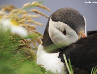 14일 렌트카 여행 패키지 | 아이슬란드 일주 & 웨스트피오르드 여행