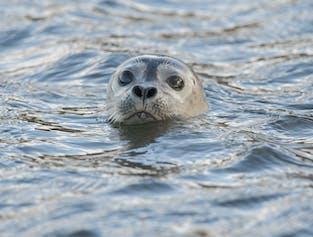 อาจจะได้เห็นแมวน้ำพักผ่อนอยู่ตรงชายฝั่งของวายตริ-ตังกาในคาบมหาสมุทรสไนล์แฟลซเนส