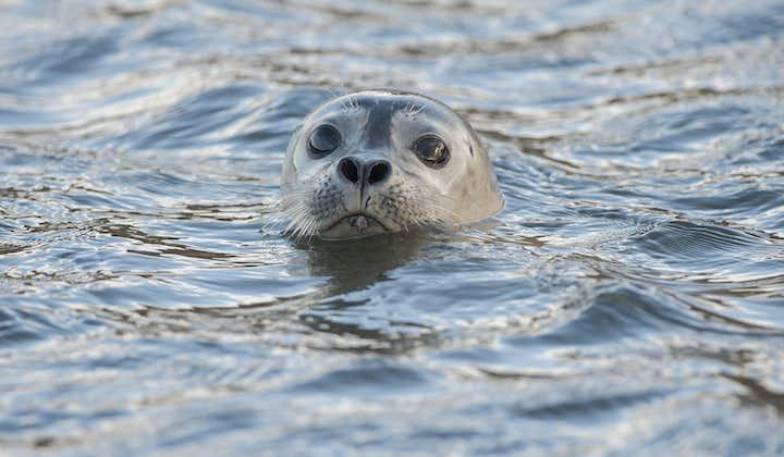 Snæfellsnes Nationalpark   Dagstur i en lille gruppe